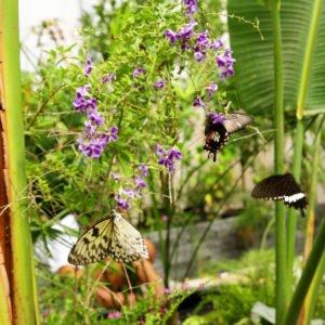 la casa delle farfalle roma